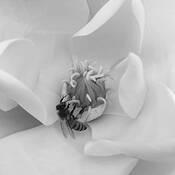 Bee by David Chui