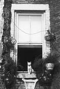 Cat as Sphinx by Jack Feder