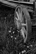 Wagon Wheel by Michael Knapstein