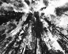 Jungle by Rima Virbauskaite