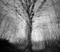 Oak by Rima Virbauskaite