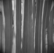 Cacti Columns by Nathaniel Magnuson