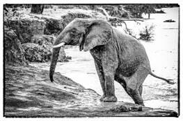 Elephant Baby by Ira Serkes