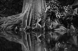 Mangroves 4 by Pamela Walter