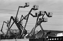 Cranes by Wayne Palmer