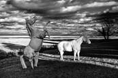 Infrared Horses in Meadow version 1 by William R. West, Jr.