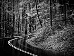 Winding Road by Rosemary Williams