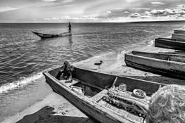 Boatman and Hamerkop by Stephen K. Hall