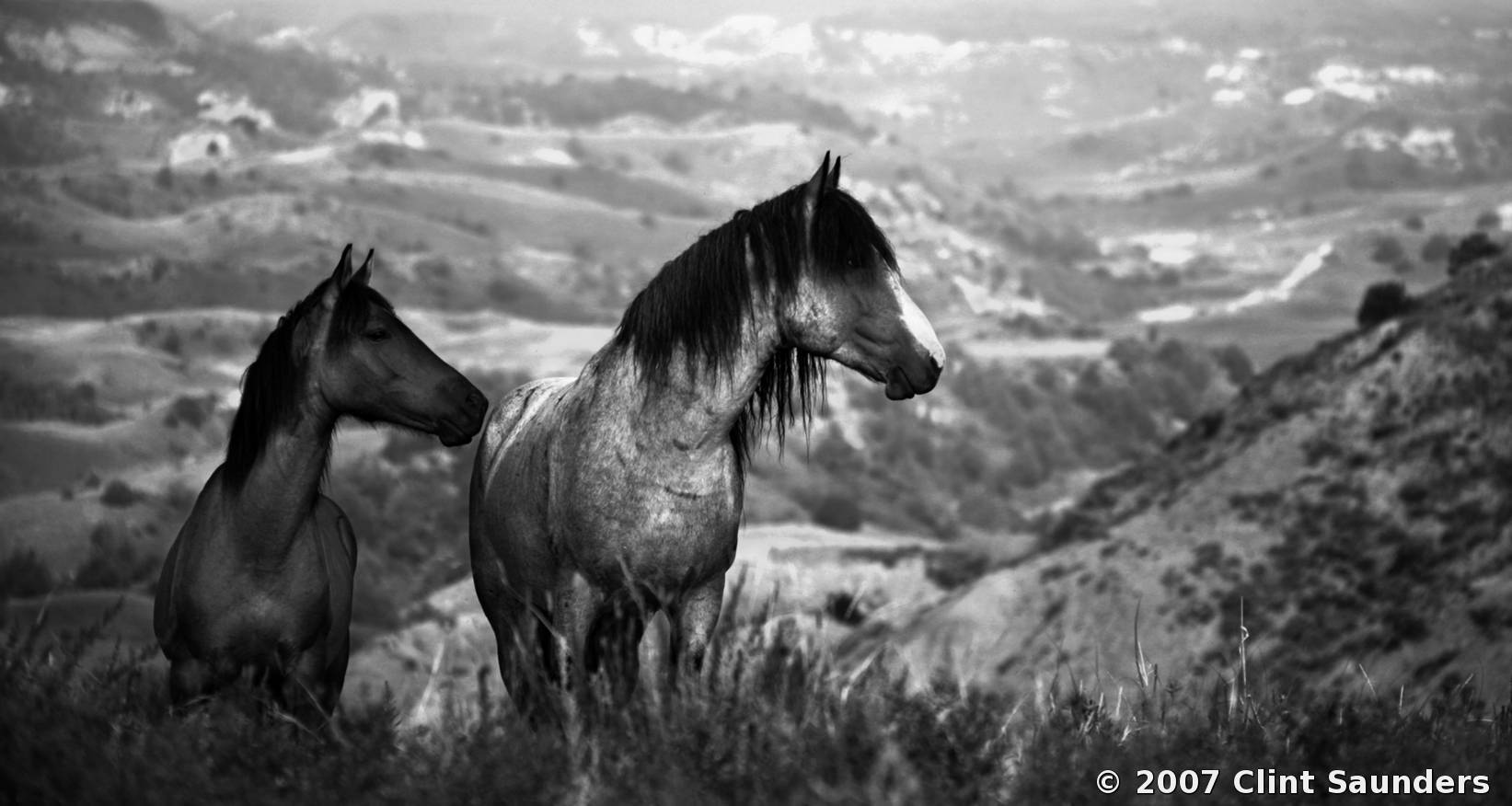Clint saunders wild horses 14