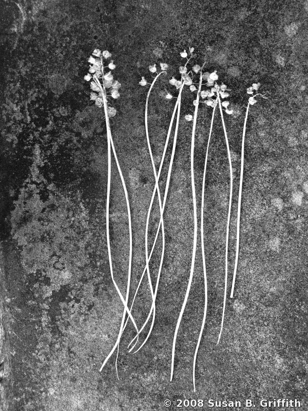 Dried Flowers By Susan B Griffith Black White Magazine For