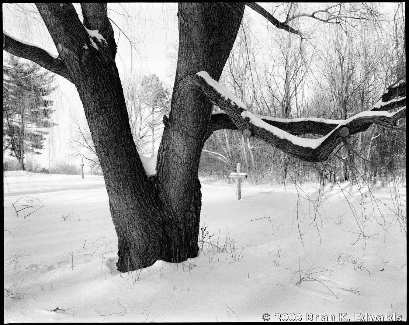 Winter Tree by Brian K  Edwards   Black & White Magazine