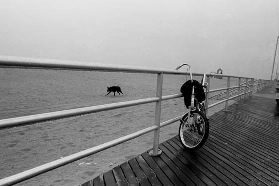 Fog dog bike