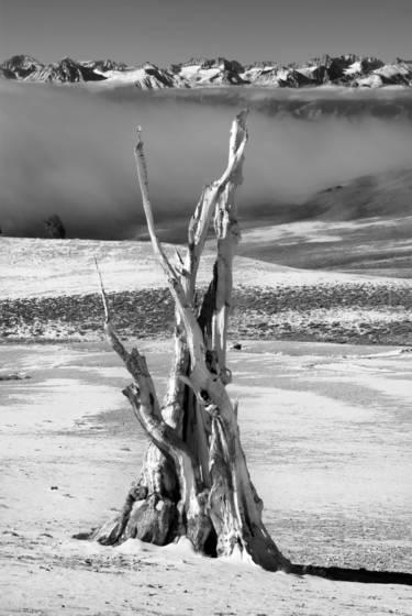 Bristlecone fog   sierra nevada 1bw
