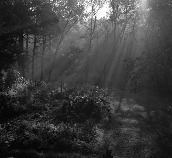 Misty morning garden