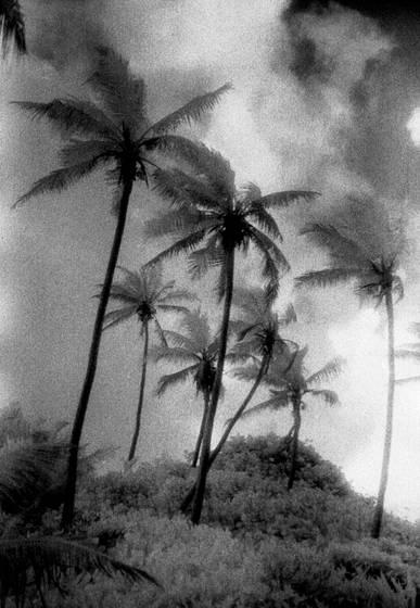 Cocogrove  10