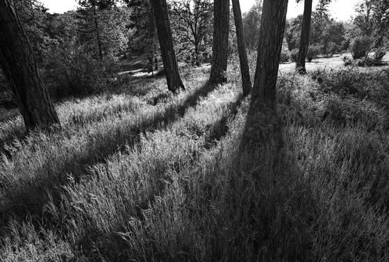 Badger meadow