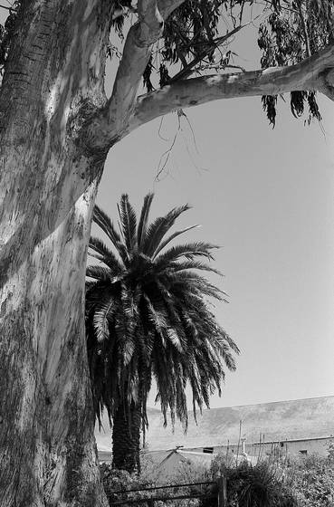 Palm and eucalyptus