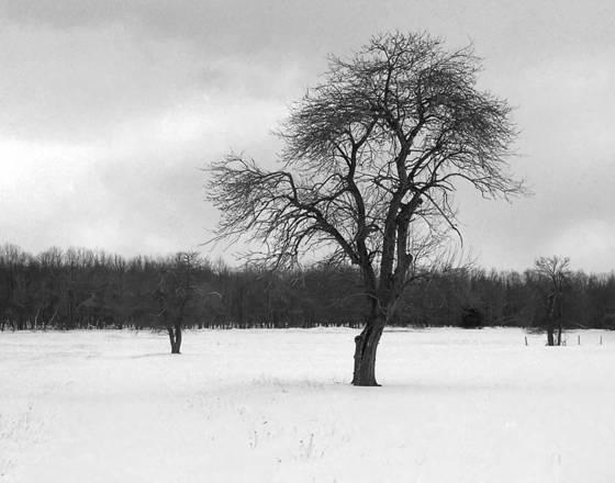 January farm