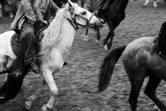 Buzkashi horse