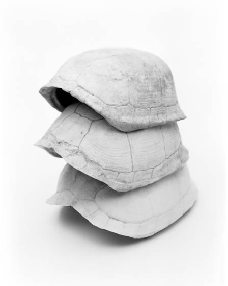 Box turtle shells