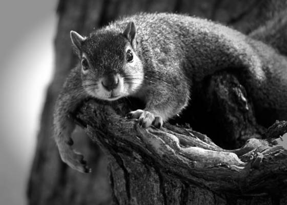 Lazy day squirrel