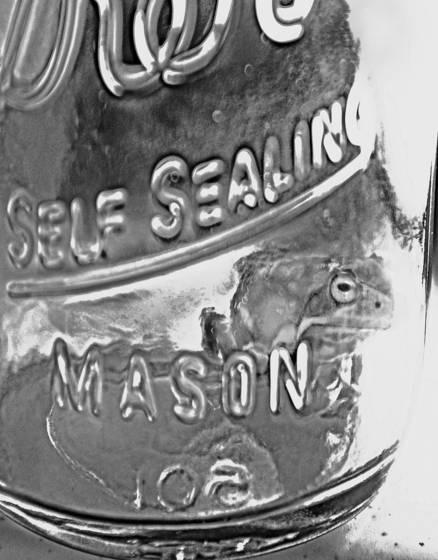 Frog in a mason jar