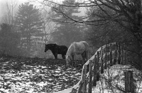Two horses by fence
