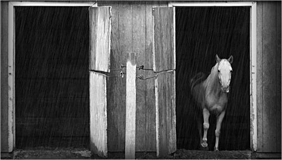 Horse and the rain
