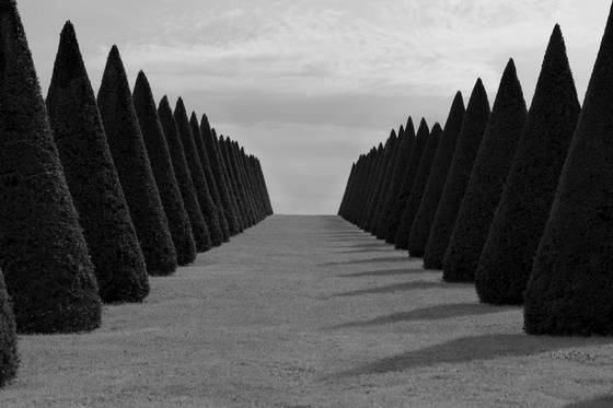 Trees at versailles