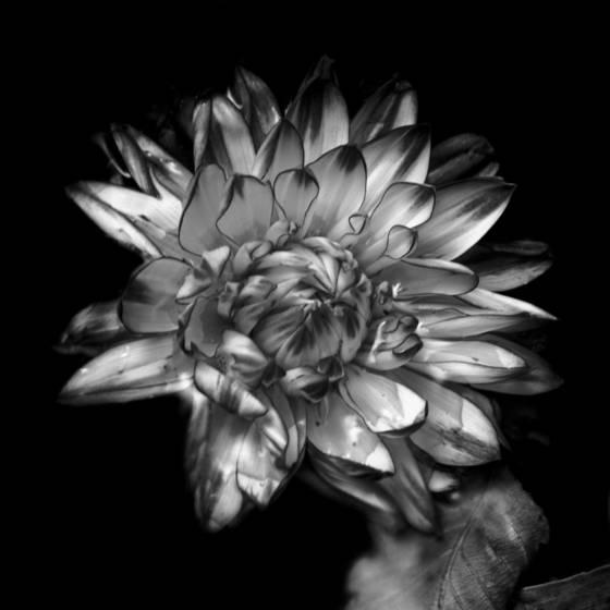 Vibrant flower