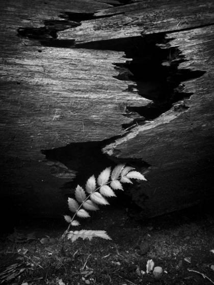 Broken log