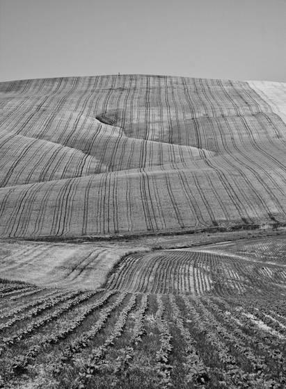 Baena fields