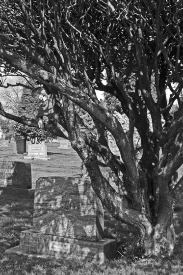 Sam in cemetery tree