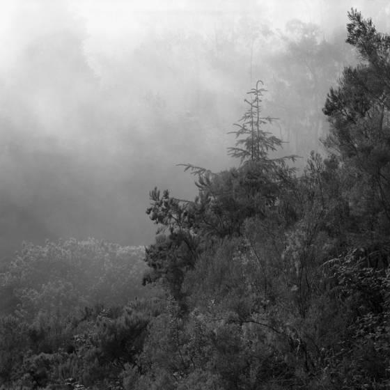 Suitable mist