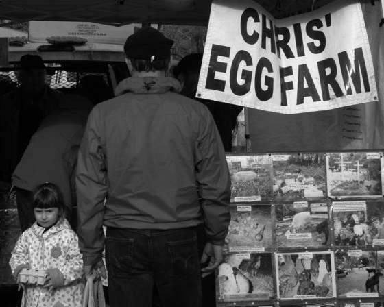 Egg shopper