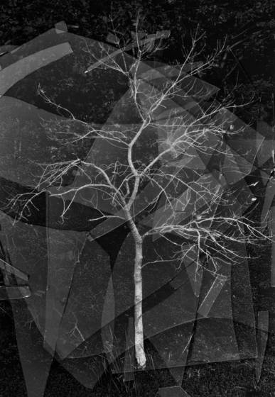 Broken fractal