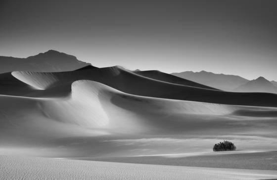 Mesquito dunes