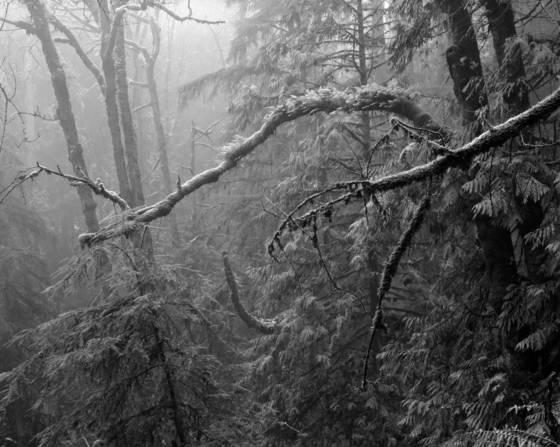 Forest park fog