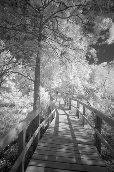Debbie breaux bridge