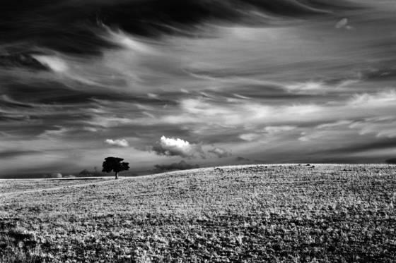 Juniper and sky