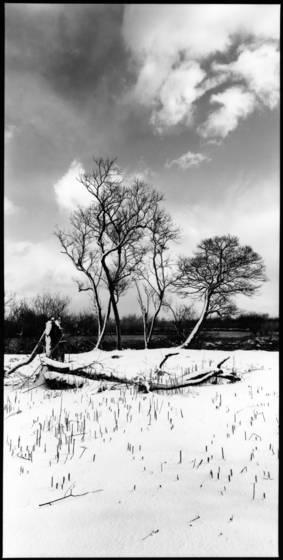 Snowy lakeside
