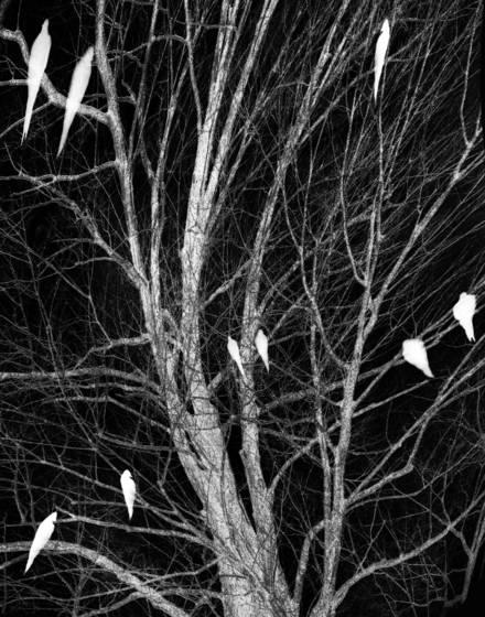 Ghost birds