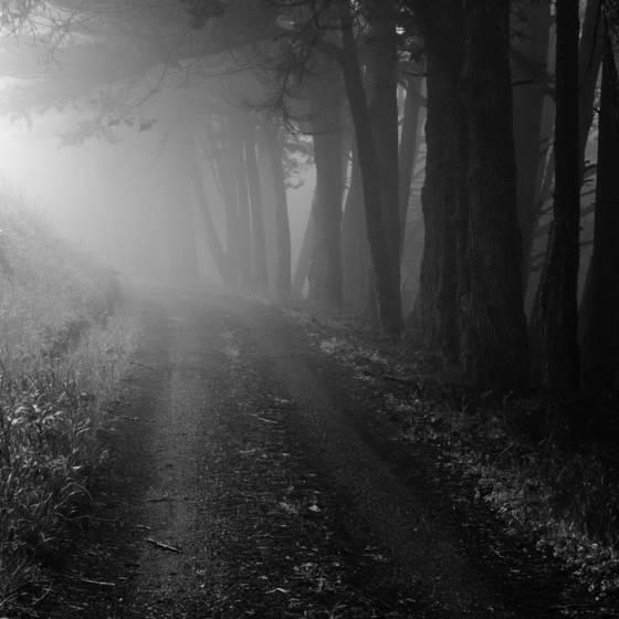 Mystic fog trees