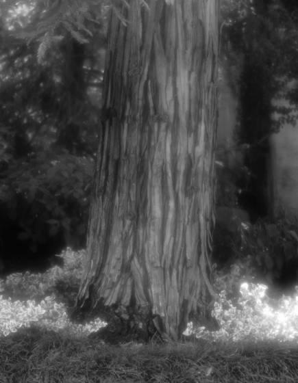 Tree number 4