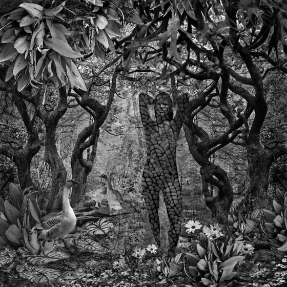 Serpentine forest