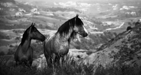 Wild horses 14
