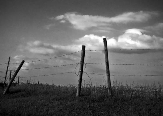 Ca s pasture