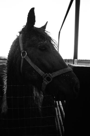 Horse soul