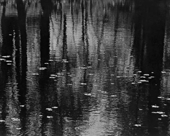 Texas swamp