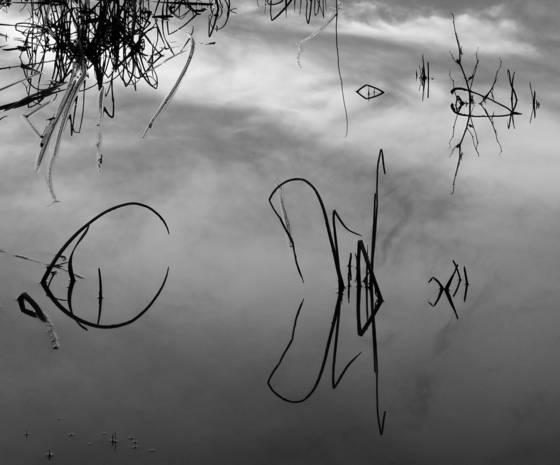 Pond series 27